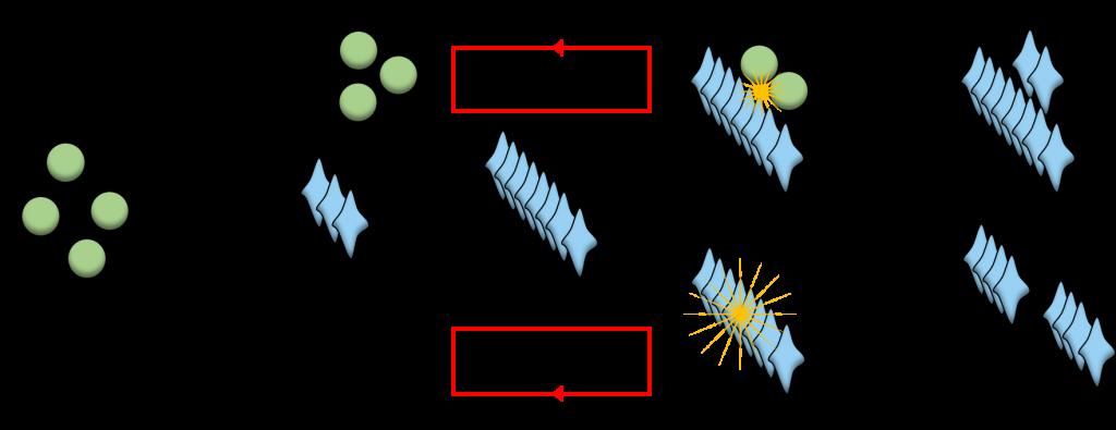 Schema iliustruojanti amiloidinių baltymų agregacijos procesą.